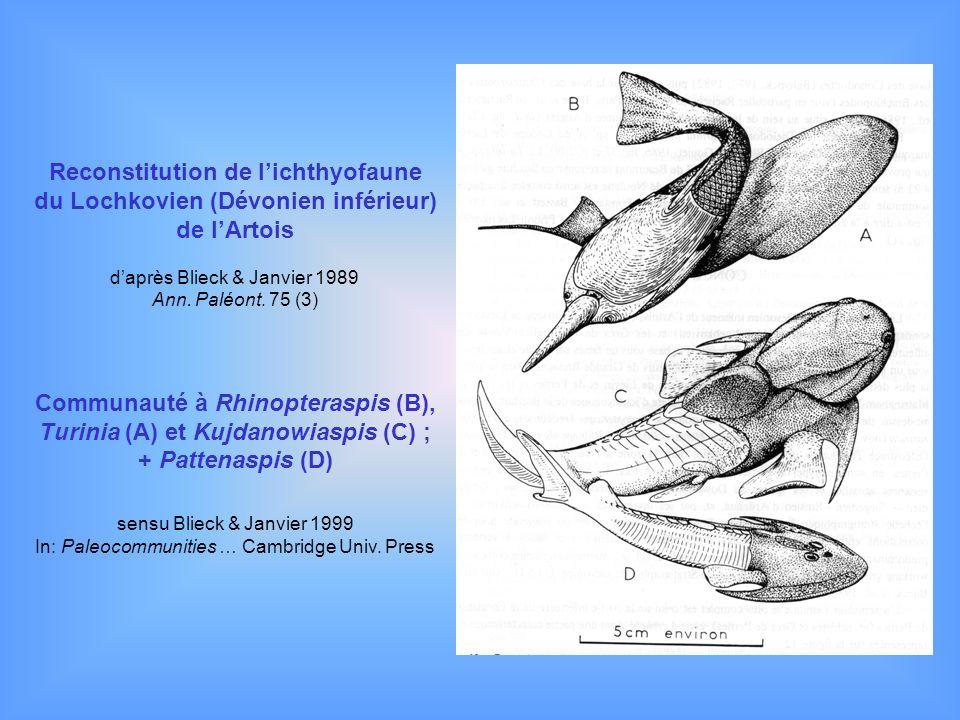 Reconstitution de l'ichthyofaune du Lochkovien (Dévonien inférieur)