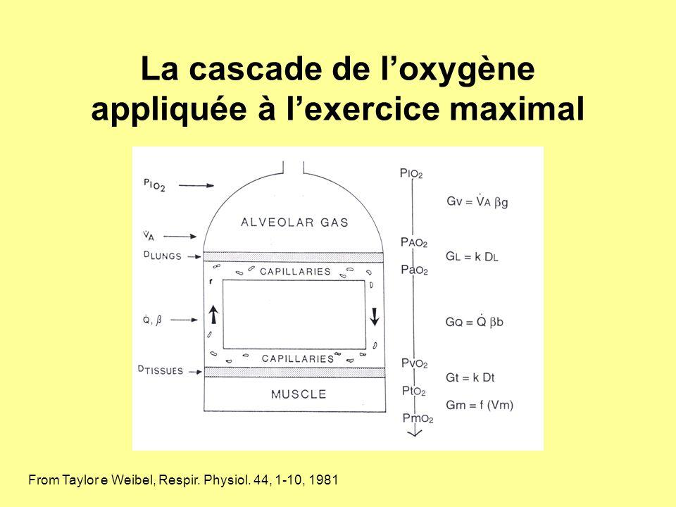 La cascade de l'oxygène appliquée à l'exercice maximal