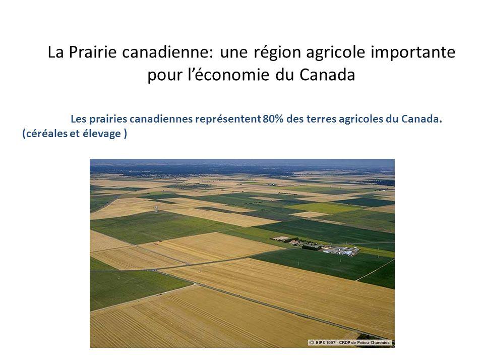 La Prairie canadienne: une région agricole importante pour l'économie du Canada
