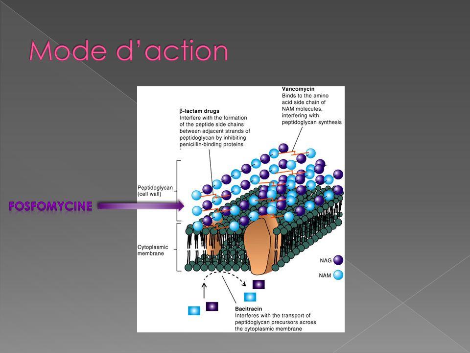 Mode d'action Fosfomycine