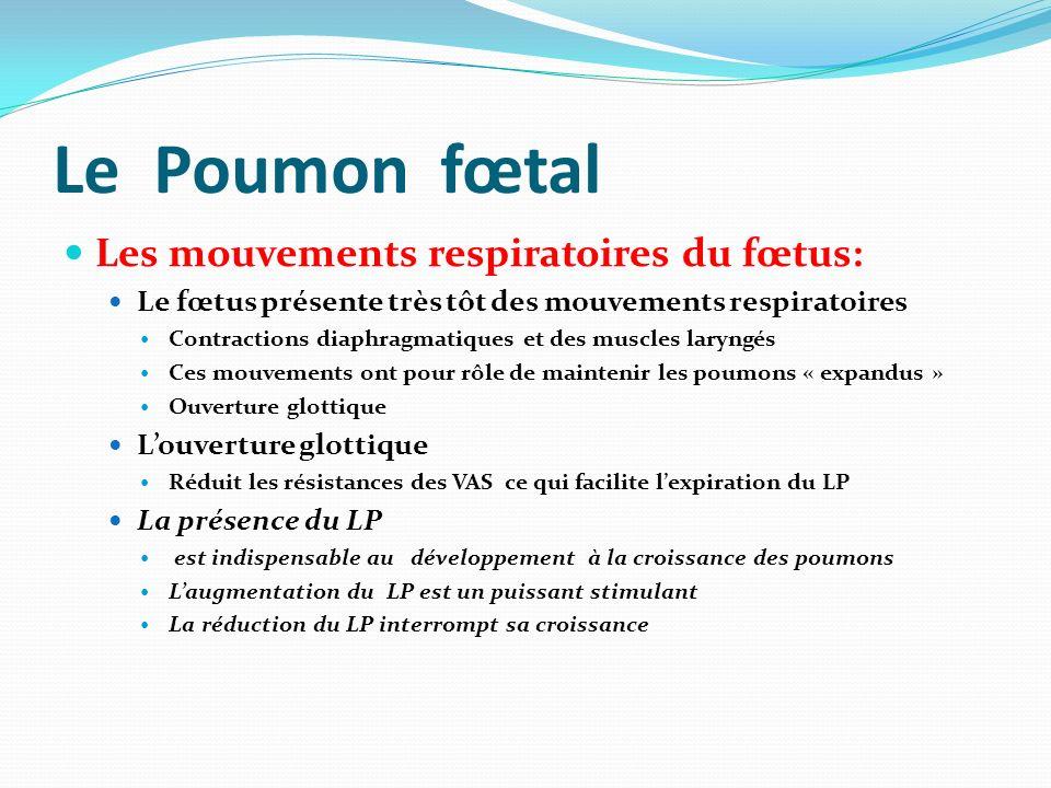 Le Poumon fœtal Les mouvements respiratoires du fœtus: