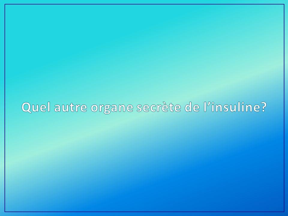 Quel autre organe secrète de l'insuline