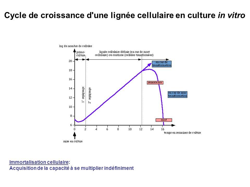 Cycle de croissance d une lignée cellulaire en culture in vitro