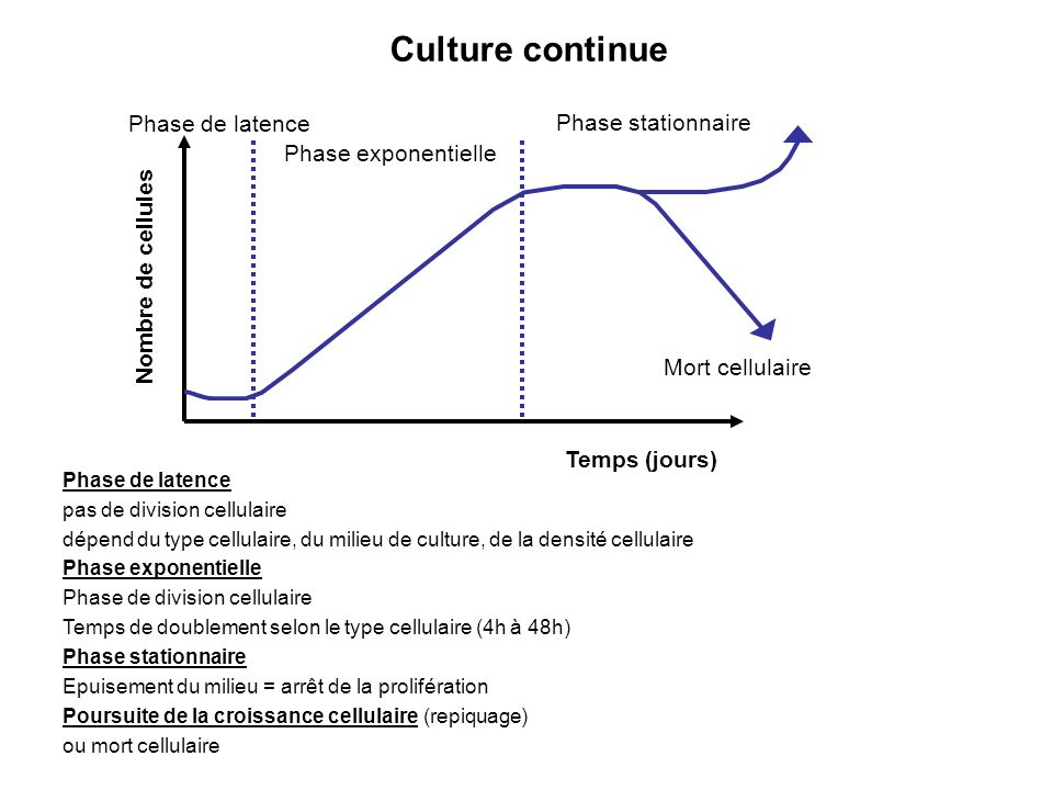 Culture continue Phase de latence Phase stationnaire
