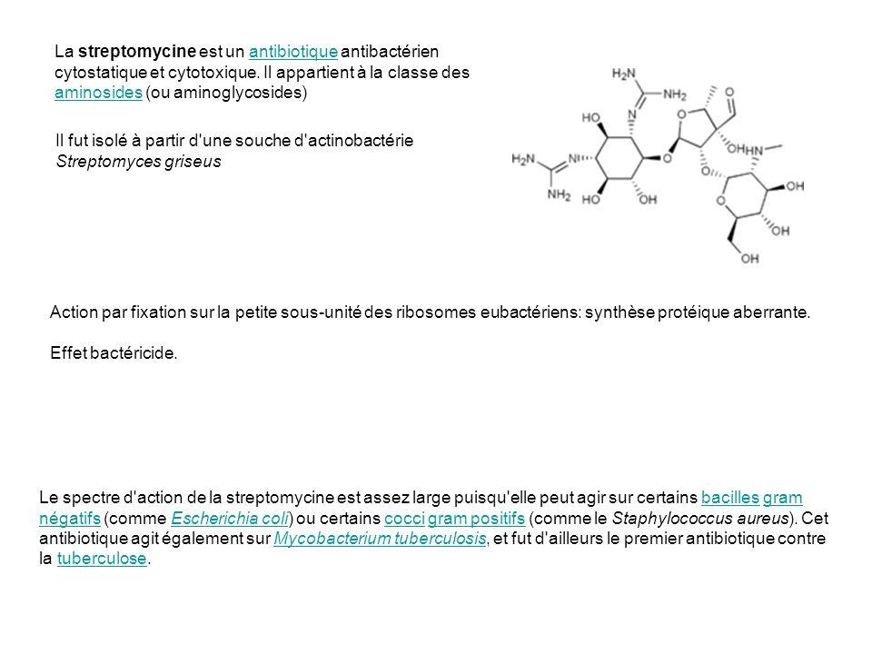 La streptomycine est un antibiotique antibactérien cytostatique et cytotoxique. Il appartient à la classe des aminosides (ou aminoglycosides)