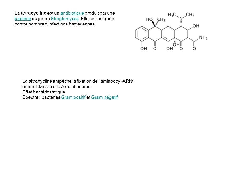 La tétracycline est un antibiotique produit par une bactérie du genre Streptomyces. Elle est indiquée contre nombre d infections bactériennes.