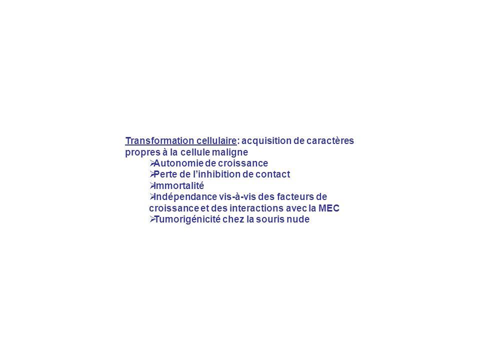 Transformation cellulaire: acquisition de caractères propres à la cellule maligne