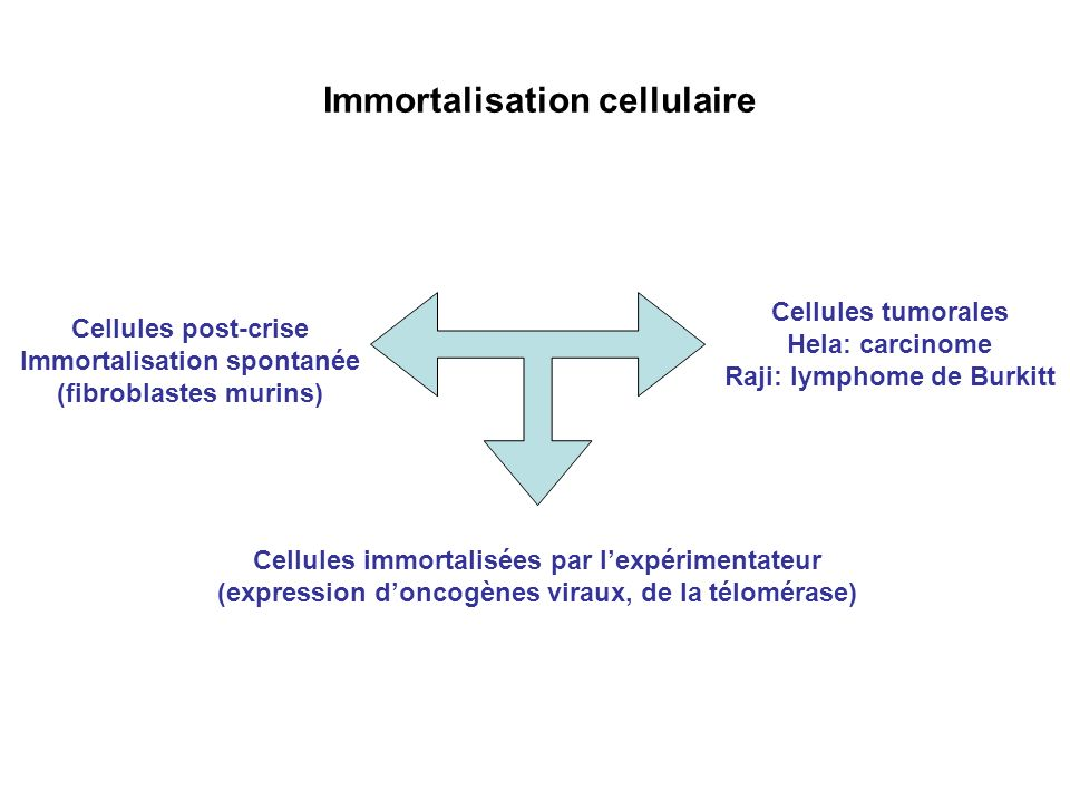 Immortalisation cellulaire