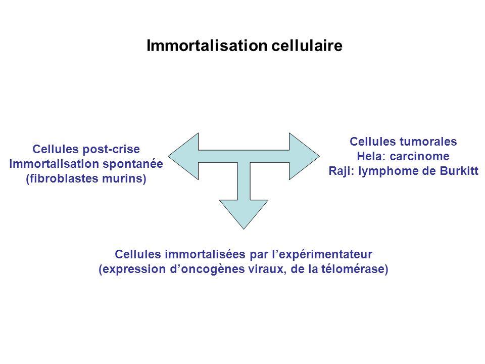 Immortalisation cellulaire