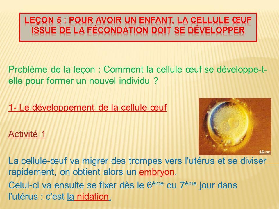 1- Le développement de la cellule œuf Activité 1