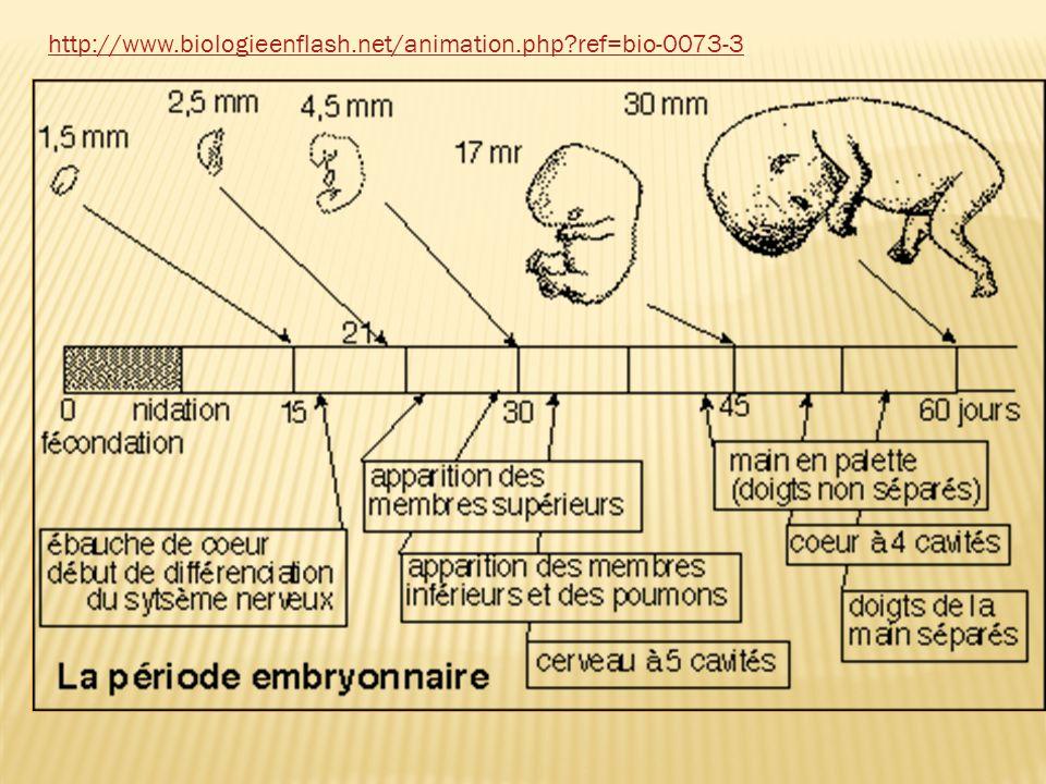 http://www.biologieenflash.net/animation.php ref=bio-0073-3