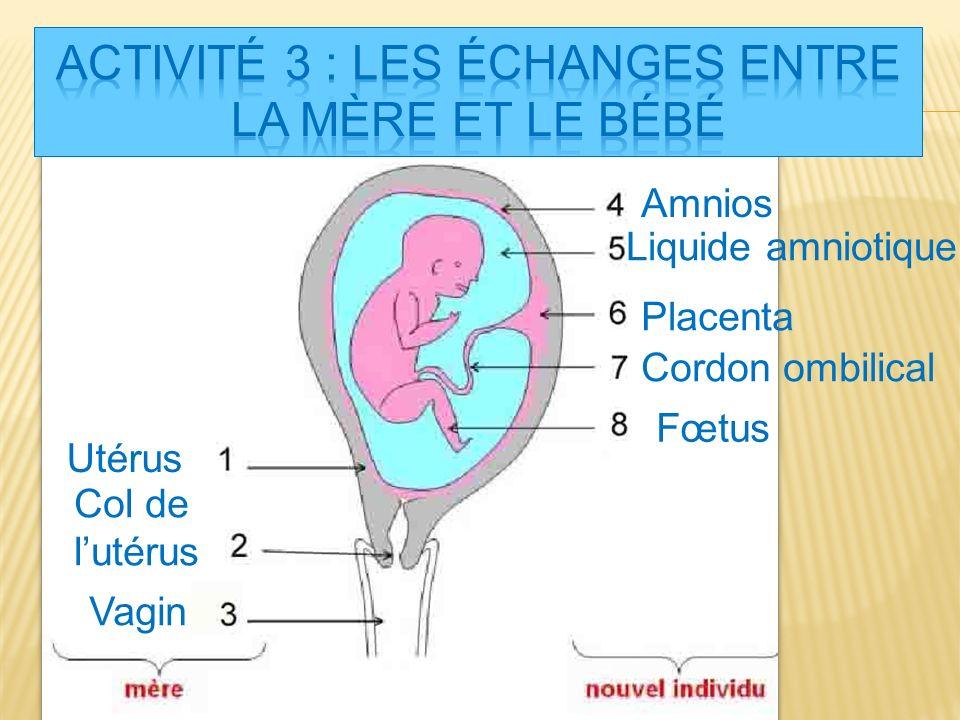 Activité 3 : Les échanges entre la mère et le bébé