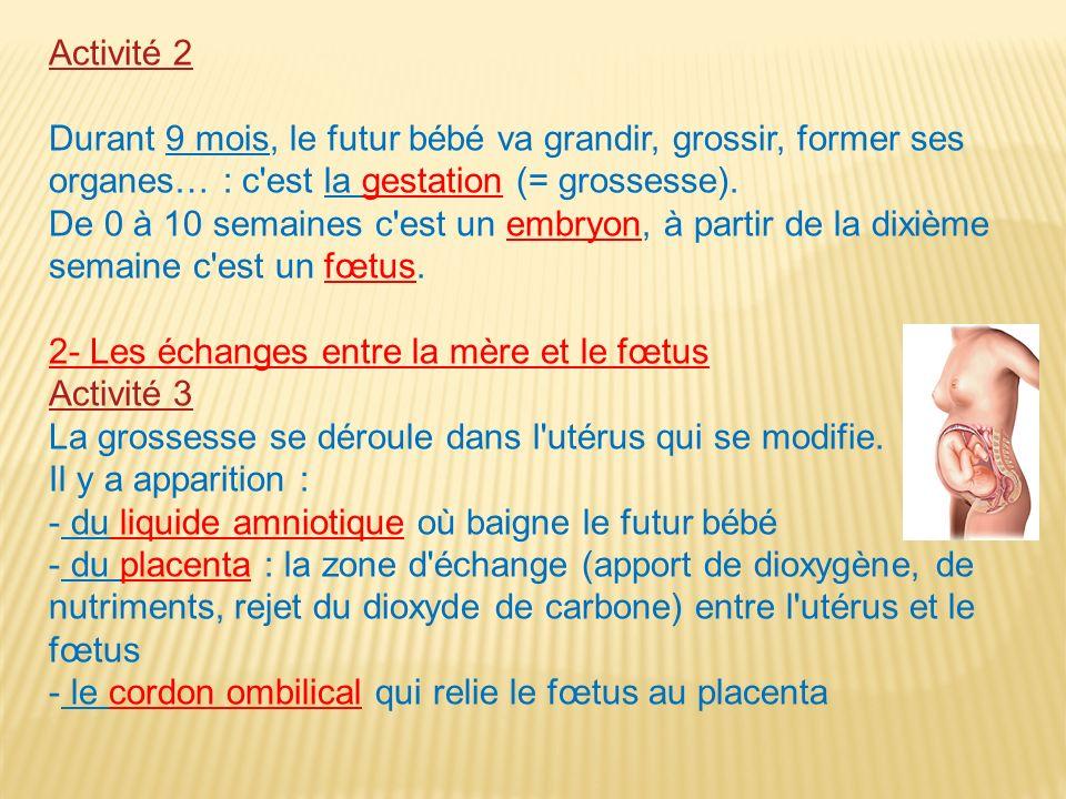 Activité 2Durant 9 mois, le futur bébé va grandir, grossir, former ses organes… : c est la gestation (= grossesse).