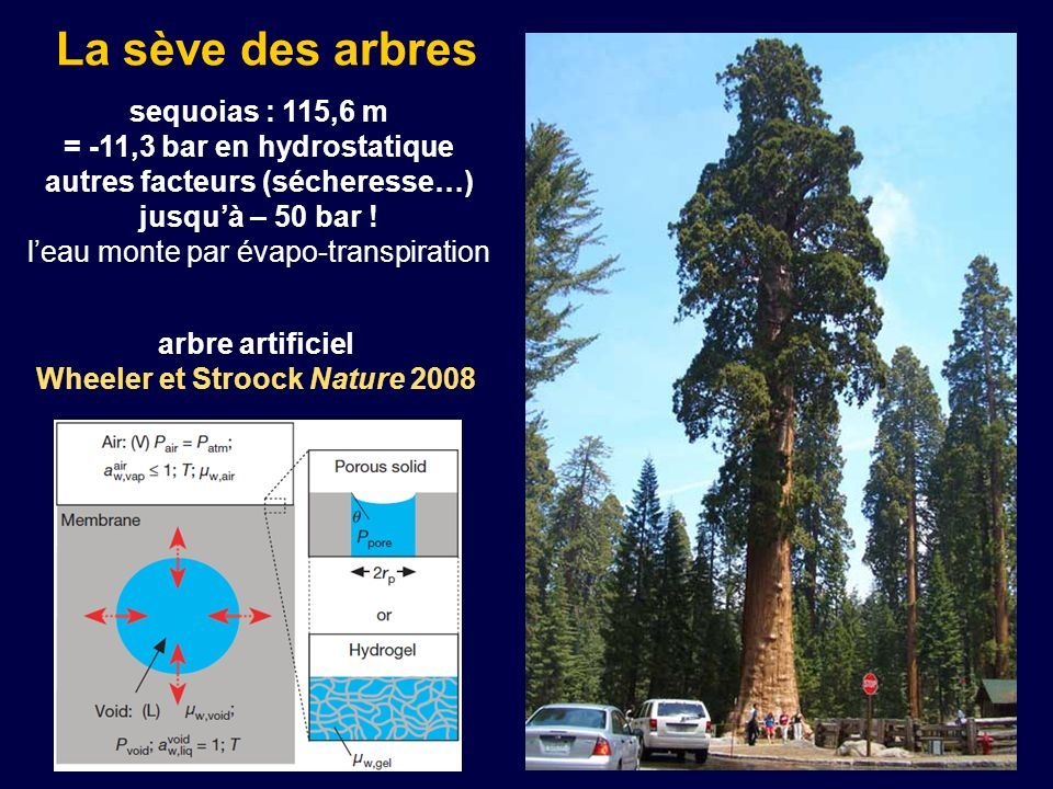 La sève des arbres sequoias : 115,6 m = -11,3 bar en hydrostatique