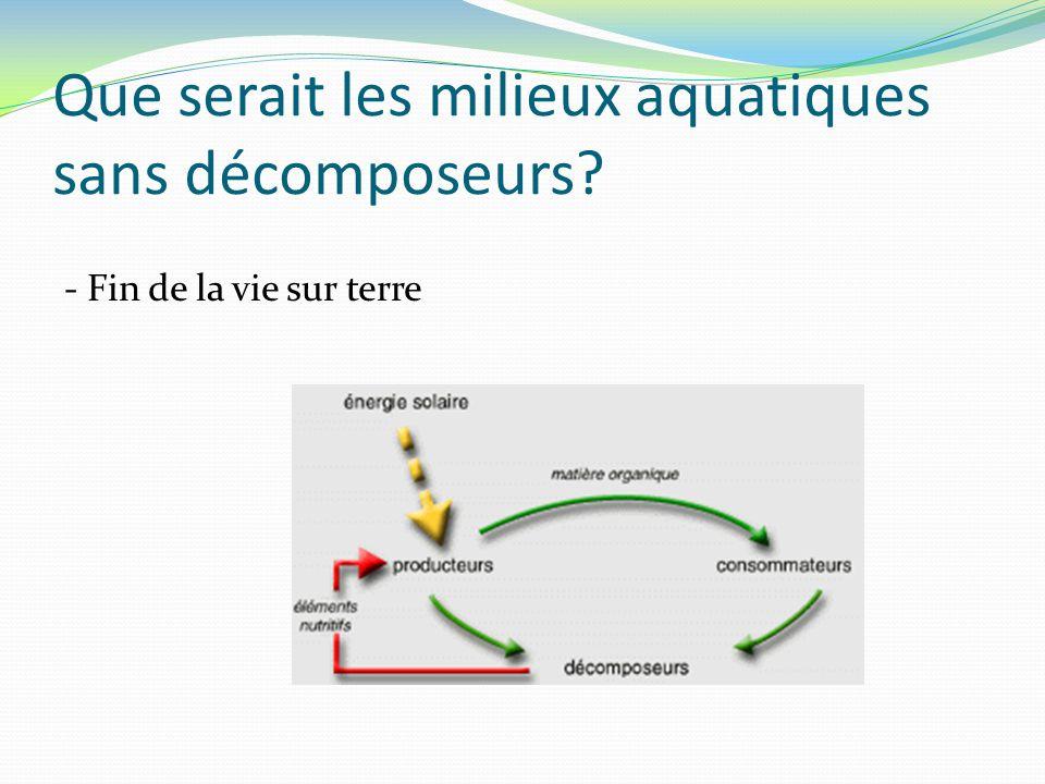 Que serait les milieux aquatiques sans décomposeurs