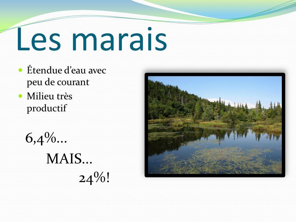 Les marais 6,4%... MAIS... 24%! Étendue d'eau avec peu de courant