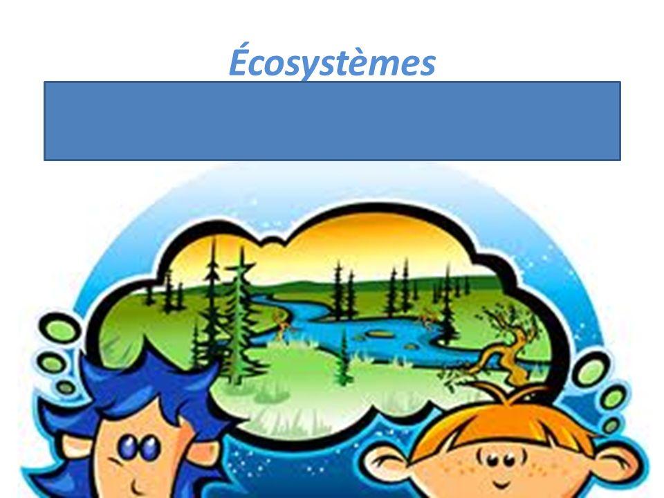 Écosystèmes Arbre, animaux, poissons, rivières, fleurs