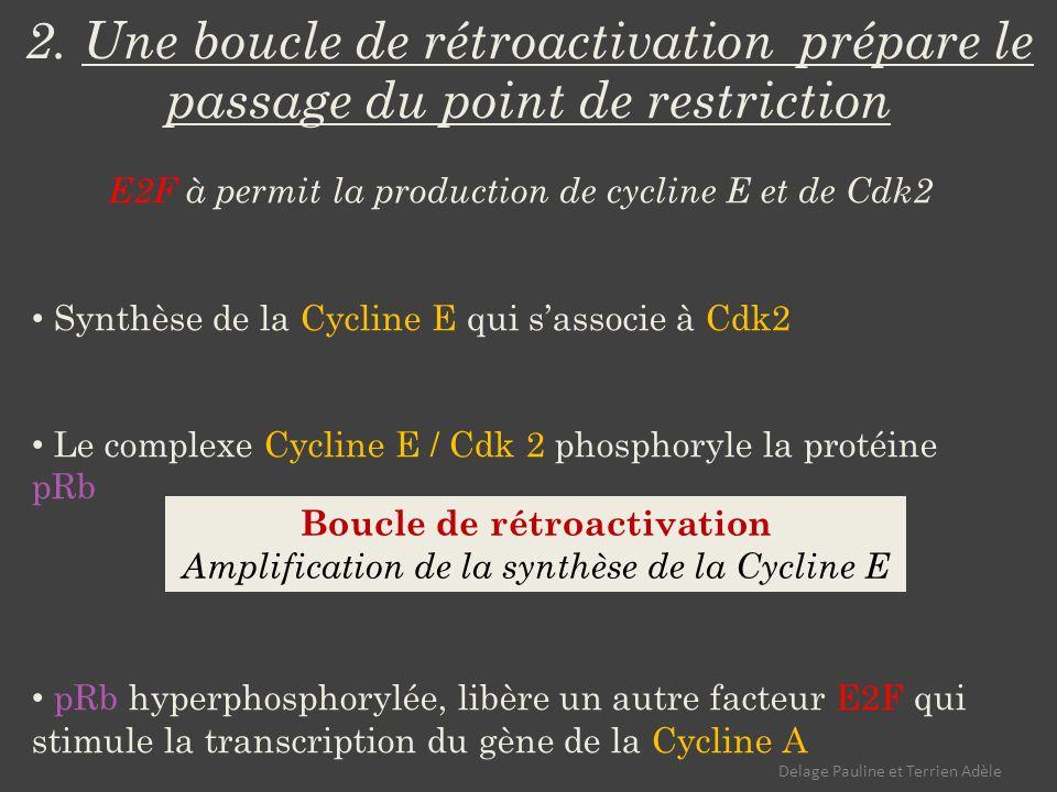 Boucle de rétroactivation