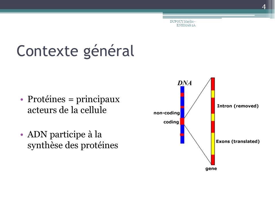 Contexte général Protéines = principaux acteurs de la cellule