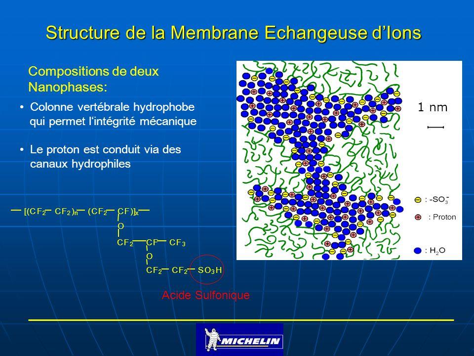 Structure de la Membrane Echangeuse d'Ions
