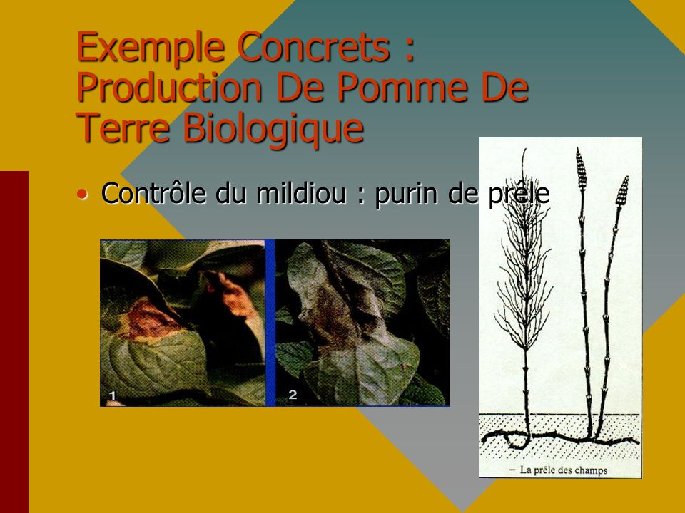 Exemple Concrets : Production De Pomme De Terre Biologique