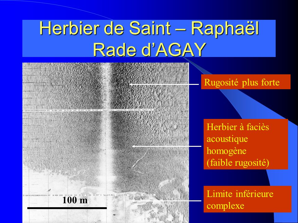 Herbier de Saint – Raphaël Rade d'AGAY