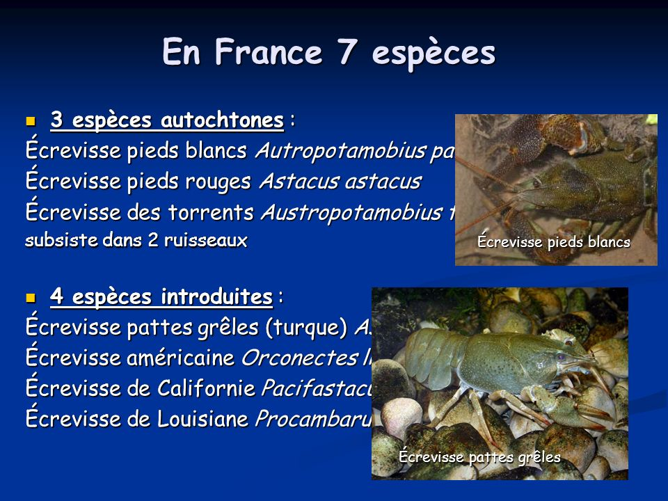 En France 7 espèces 3 espèces autochtones :