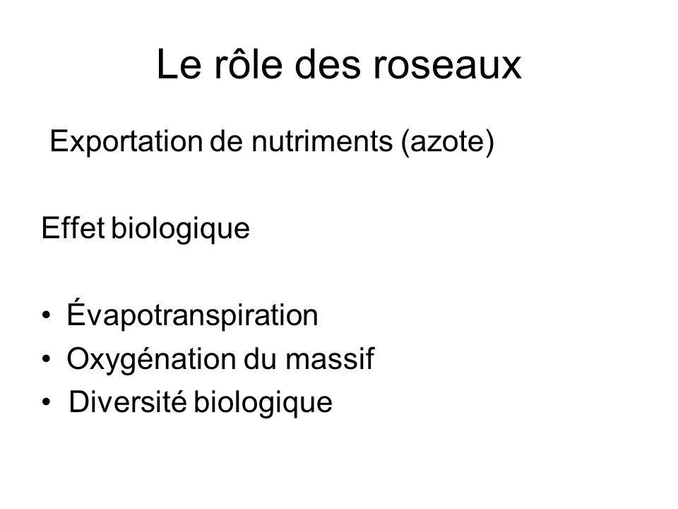 Le rôle des roseaux Exportation de nutriments (azote) Effet biologique