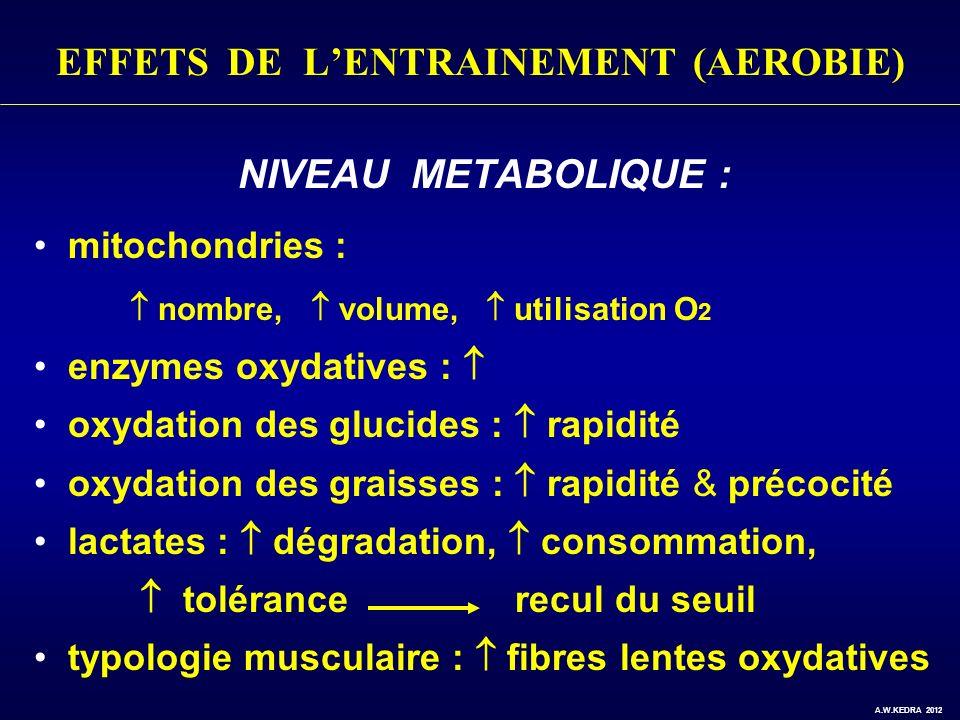 EFFETS DE L'ENTRAINEMENT (AEROBIE)