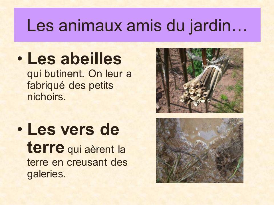 Les animaux amis du jardin…
