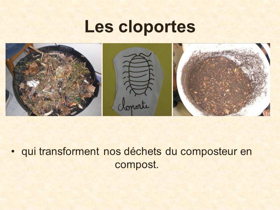qui transforment nos déchets du composteur en compost.