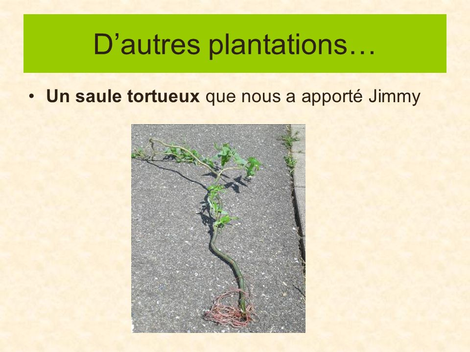 D'autres plantations…