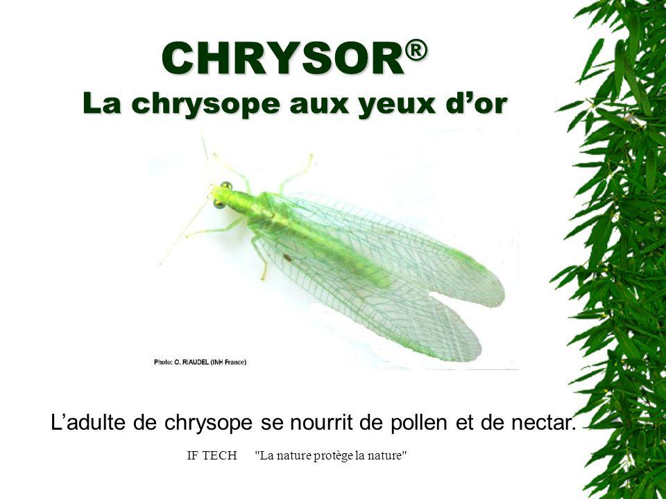 CHRYSOR® La chrysope aux yeux d'or