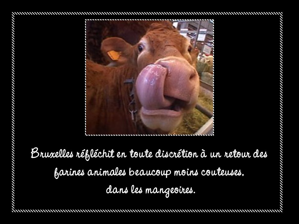 Bruxelles réfléchit en toute discrétion à un retour des farines animales beaucoup moins couteuses,