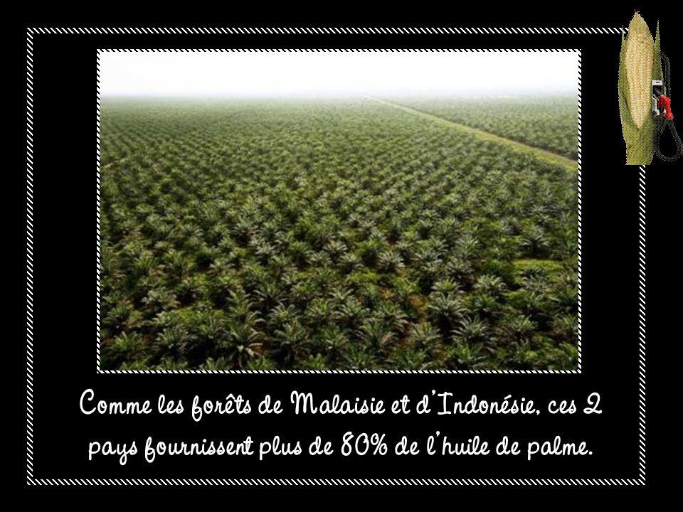 Comme les forêts de Malaisie et d'Indonésie, ces 2 pays fournissent plus de 80% de l'huile de palme.