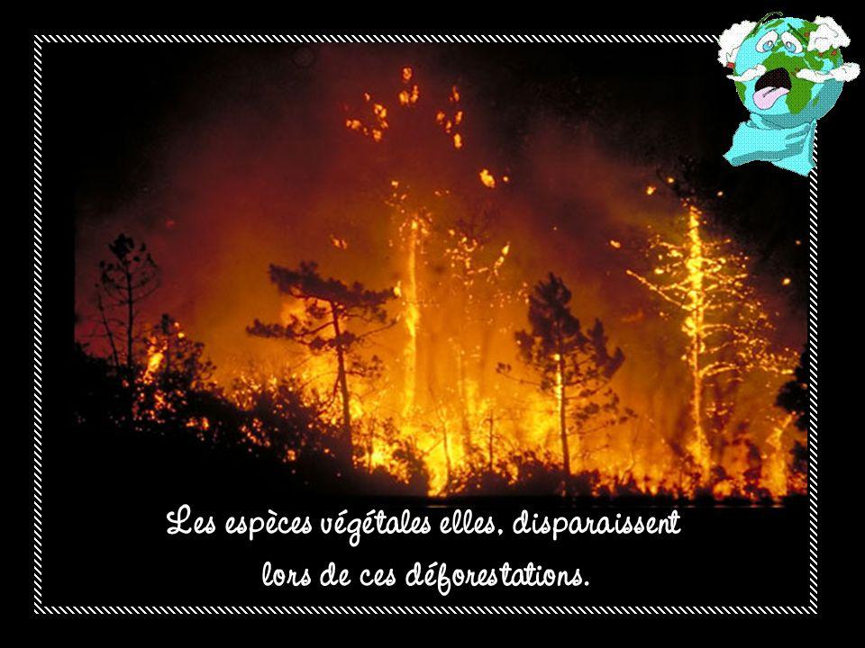 Les espèces végétales elles, disparaissent lors de ces déforestations.