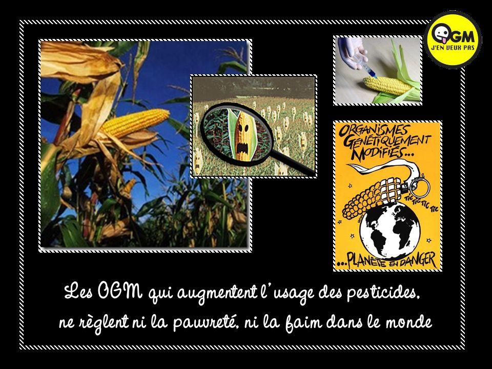 Les OGM qui augmentent l usage des pesticides,