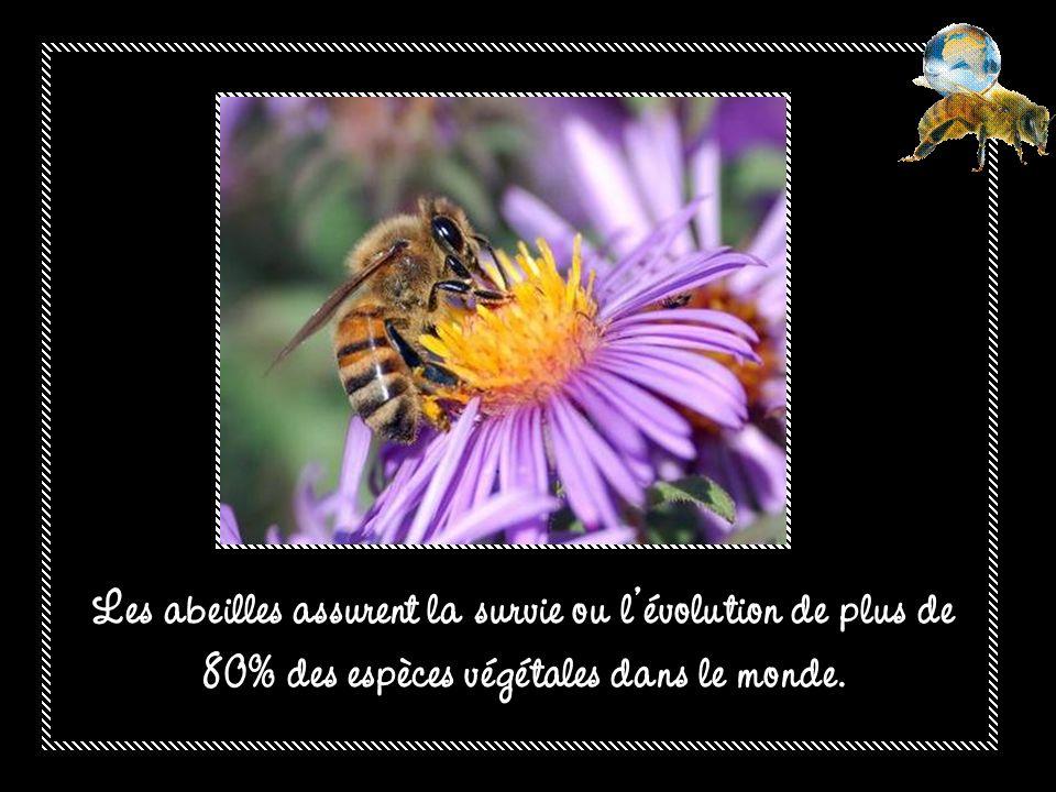 Les abeilles assurent la survie ou l'évolution de plus de 80% des espèces végétales dans le monde.