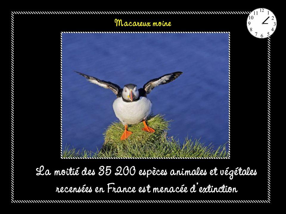 Macareux moine La moitié des 35 200 espèces animales et végétales recensées en France est menacée d'extinction.