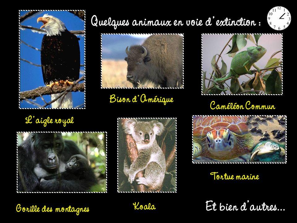 Quelques animaux en voie d extinction :