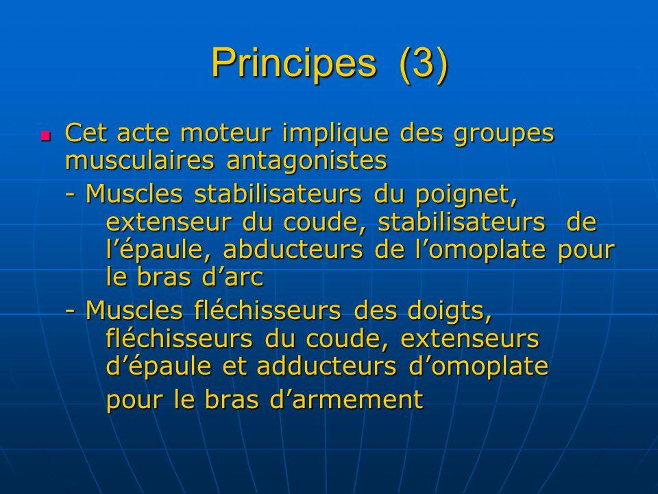 Principes (3) Cet acte moteur implique des groupes musculaires antagonistes.