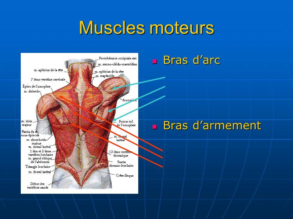 Muscles moteurs Bras d'arc Bras d'armement