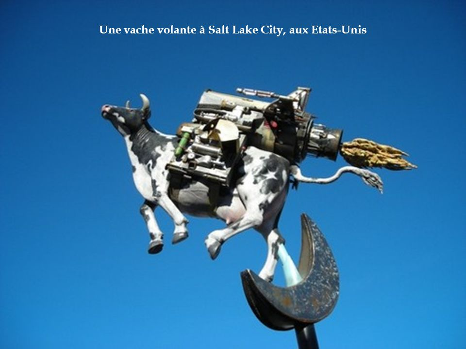 Une vache volante à Salt Lake City, aux Etats-Unis
