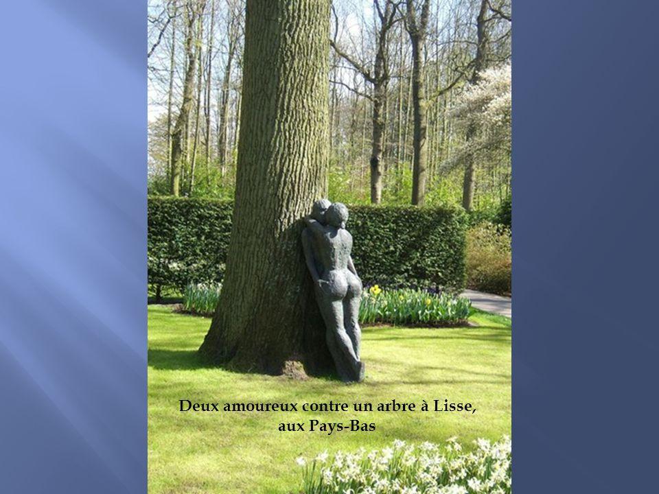 Deux amoureux contre un arbre à Lisse,