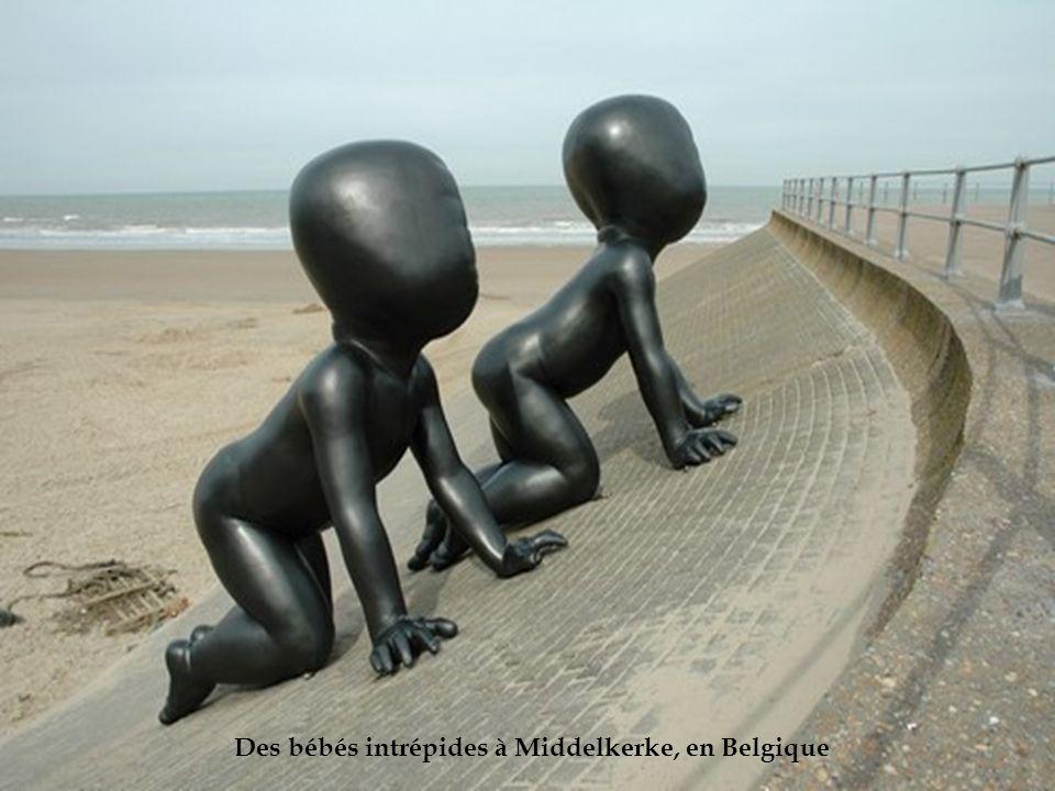 Des bébés intrépides à Middelkerke, en Belgique