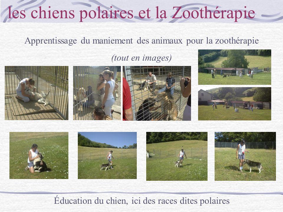 les chiens polaires et la Zoothérapie