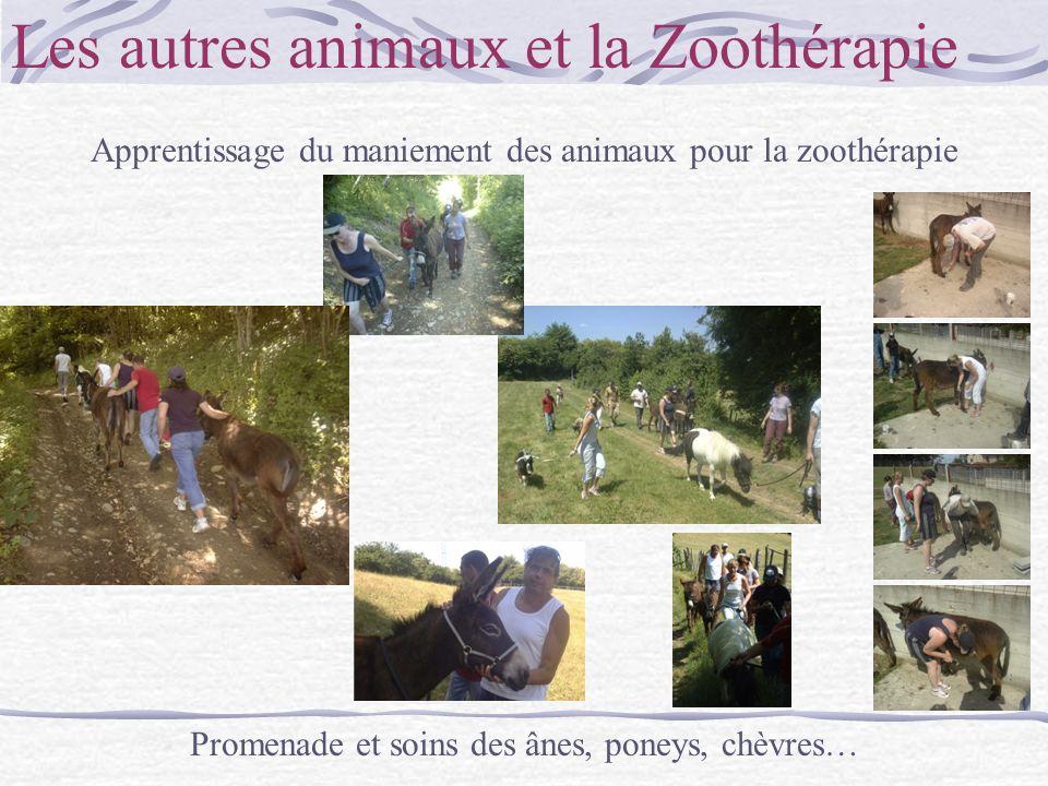 Les autres animaux et la Zoothérapie