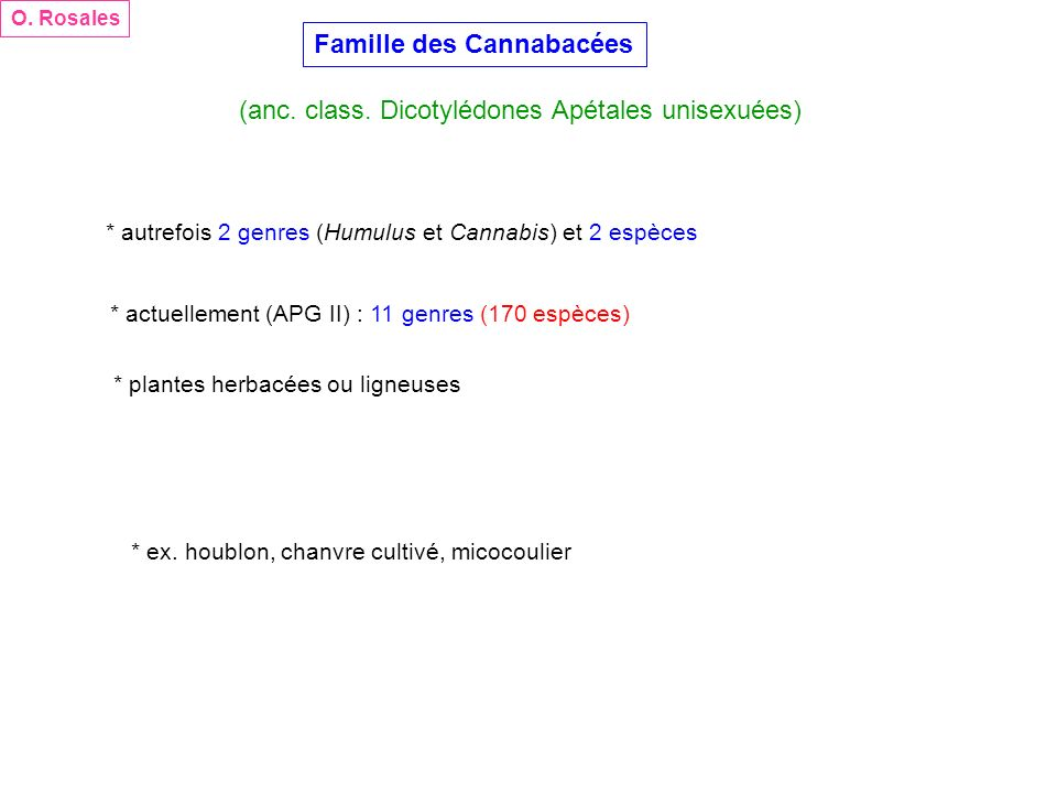 Famille des Cannabacées