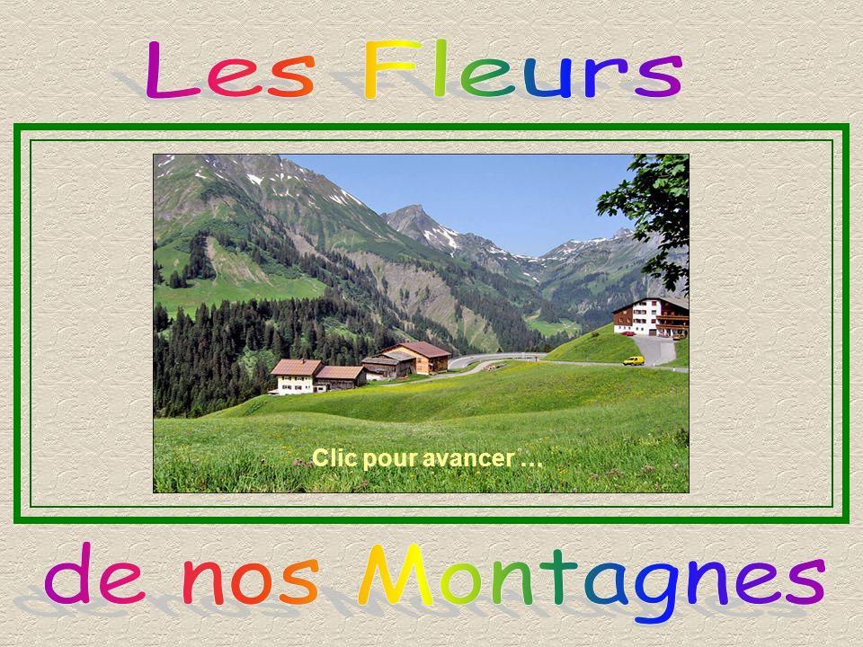 Les Fleurs Clic pour avancer … de nos Montagnes