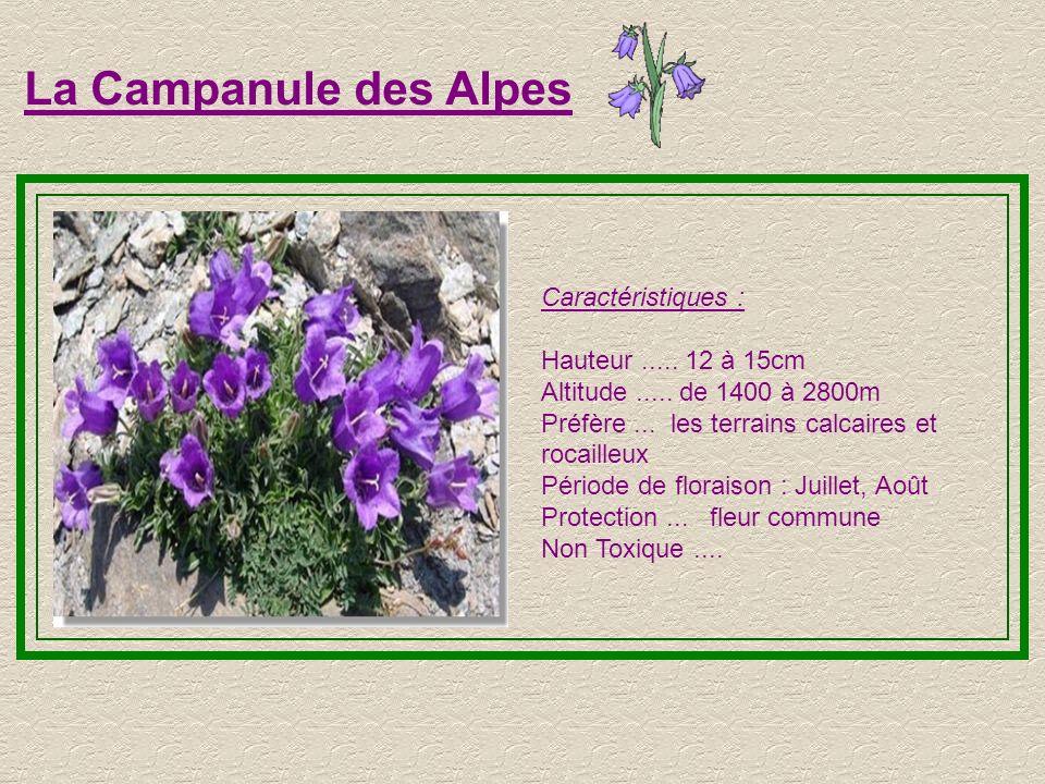 La Campanule des Alpes Caractéristiques : Hauteur ..... 12 à 15cm